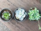 10 undemanding indoor plants to have in your house or office