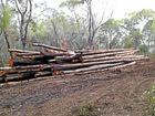 Tree clearing debate ends in vote rejection