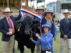 Noosa Show has a grand champion  to display in the ring