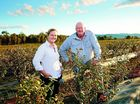 AUSTRALIA'S first blueberry grower triumphed at the Coles Supplier Awards, winning the Product Innovation Award for a new juicy, flavoursome variety.