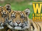 Win an amazing Tiger Island Adventure