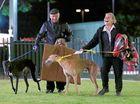 Casino vet slams greyhound 'experts'
