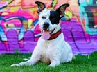 The Warra Rehoming Centre in Bracken Ridge has dogs and cats looking for new forever homes.