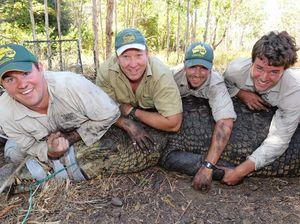 Bindi's boyfriend helps release huge croc