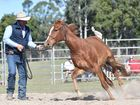 Guy McLean Horsemanship Spectacular at Susan River Homestead - Guy works his magic with this 3 yr old untamed gelding.