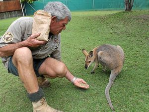 MUMS NEED CARBS: Fraser Coast Wildlife Sanctuary curator Ray Revill with recent mum Isabel.