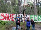 Steve Irwin Way Forest advocates will adopt a unique strategy on Saturday to call for protection of this key Coast environmental asset.