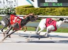 Letter to the Editor: Greyhound backlash coming