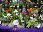 """The 2016 Orchid Show themed """"Symphony of Orchids"""" will be held on 1st & 2nd October.  Commencing 9.00am both days and finishing 4.00pm Saturday & 3.00pm Sunday."""