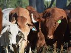 A NEW survey has indicated that good winter rainfall has strengthened rural confidence.