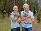 Sir Richard opens up to help Noosa koalas
