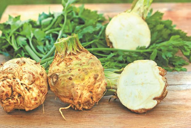 Get your free celeriac seeds with today's paper.