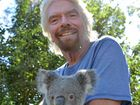 Noosa parks deaths highlight need for Sir Richard's koala helpSir Richard's koala help