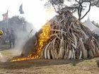 Eumundi set for ivory trade protest
