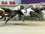 A Federal Court challenge to the NSW greyhound racing ban could see the legislation overturned.
