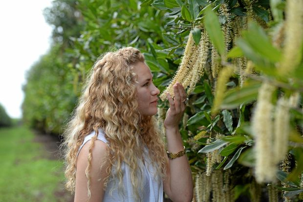MACADAMIA BLOSSOMS: Mikayla Haupt takes in the aroma of Spring in Bundaberg.