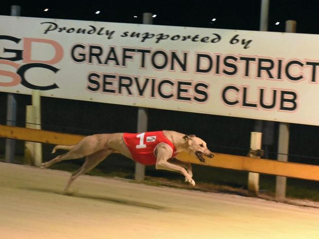 Homes will be needed for about 19,000 greyhounds, according to estimates in a leaked draft interim report.