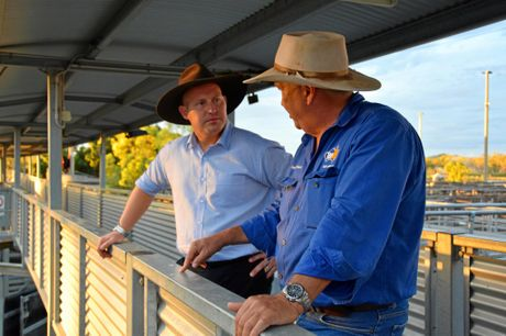 TopX Gracemere's Brad Mulvihill talks business with Queensland Treasurer Curtis Pitt during his visit to the Gracemere Saleyards yesterday.Photo Amber Hooker / CQ News