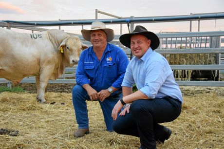 TopX Gracemere's Brad Mulvihill in the pen with Queensland Treasurer and acting Premier Curtis Pitt and one of the bull's from yesterday's Charbray sale at the Gracemere Saleyards.Photo Amber Hooker / CQ News