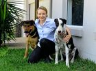 Dr Abbie Tipler with Archie and Mia. Mia had to have surgery after being attached by a kangaroo. She lost so much blood that they had to take blood from Archie to keep her alive.