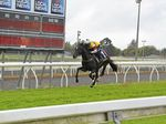 Pure Luck and jockey Nozi Tomizawa race to a comfortable 850-metre two-year-old barrier trial win at Clifford Park on September 13.
