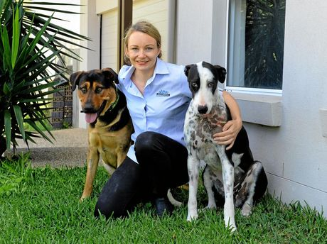 Dr Abbie Tipler from Greater Springfield Veterinary Hospital with Archie and Mia. She lost so much blood after being kicked by a kangaroo that they had to take blood from her best mate Archie to keep her alive.