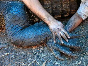 Australia Zoo team in croc country