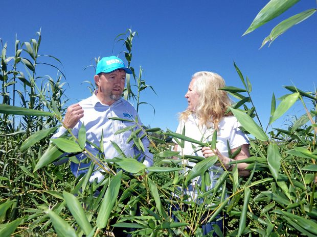 NCMC's Simon Stahl with Bronwyn Barkla (Associate Professor of Plant Science at SCU) check the plants at the NCMC Savilles Rd site where a research project with Southern Cross University is underway to test the use of wastewater from meatworks on plants and soil.