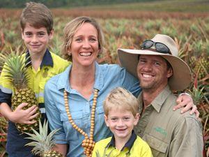 Sweet season for pineapple growers