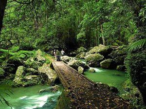 GO WILD: Get a natural high at Kondalilla Falls, Montville.