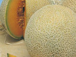 Rockmelon and prosciutto: a match made in heaven