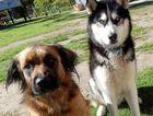 LVRC to crackdown on dog registrations