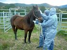 The death of Tin Can Bay horse Bella has been taken to Parliament