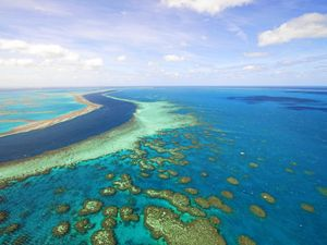 Reef health is not 'black and white' issue: Expert