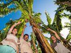Twin bunch bumper for banana growers