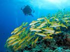 IN DEEP: Ensure maintenance of buoyancy control device