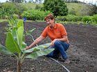 Growers go bananas to lock in Mackay industry