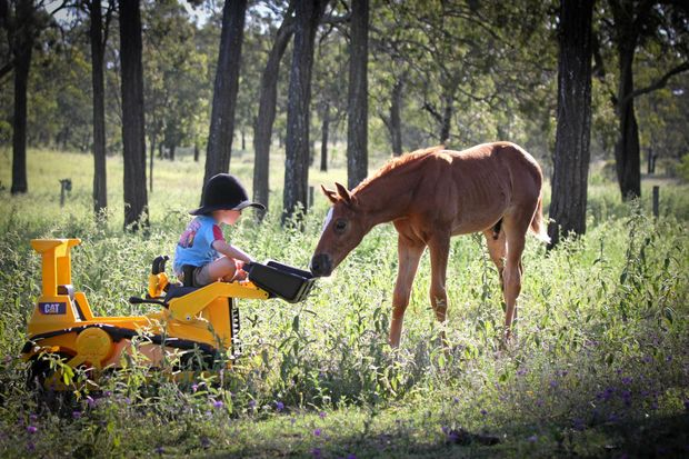 """Easton Smith, 4, and """"his"""" warmblood foal Marshall HD Lone Star by Lauries As sharing a moment."""