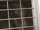 Dog racing to stay in NSW.