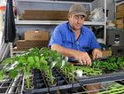 Seasoned farmer Don Currey working in the shed at Currey Flowers.