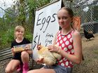 Two young girls have been scratched out of savings after a thief stole nearly 100 eggs from their road-side stall, and they need your help to crack the case.