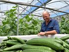 FARMING SMARTER: Cucumber and blueberry grower Gianni Rosetto.