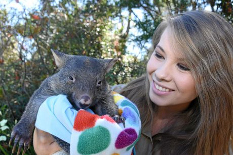 Bindi Irwin, just like the rest of the team at Australia Zoo, is smitten with the new wombat joey.