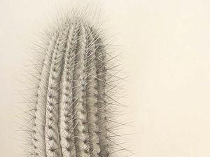 FIRST PRIZE: Bronwyn Van De Graaff's artwork Cactus.