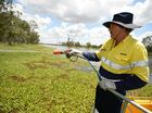 Michael Peacock spraying water weeds at Yeppen Lagoon.