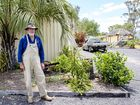 BACK UP AGAIN: Lawrie Moore stands to the left of the remains of the palm tree he was pruning when he fell and hit his head in March, 2015.