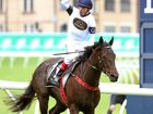 Yankee Rose bringing 'A-game' to Cox Plate, says trainer