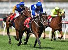 The five-year-old is set to start the shortest-price favourite in the race since So You Think went around at $1.50 in 2010.