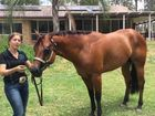 Quarter horse halter winner