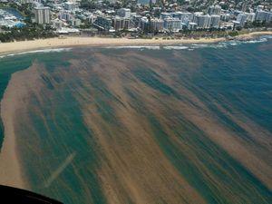 Sea lice bring sting to Coast beaches